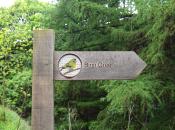 Waymarker Greenfinch