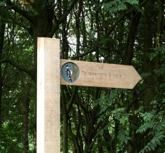 Waymarker Woodpecker